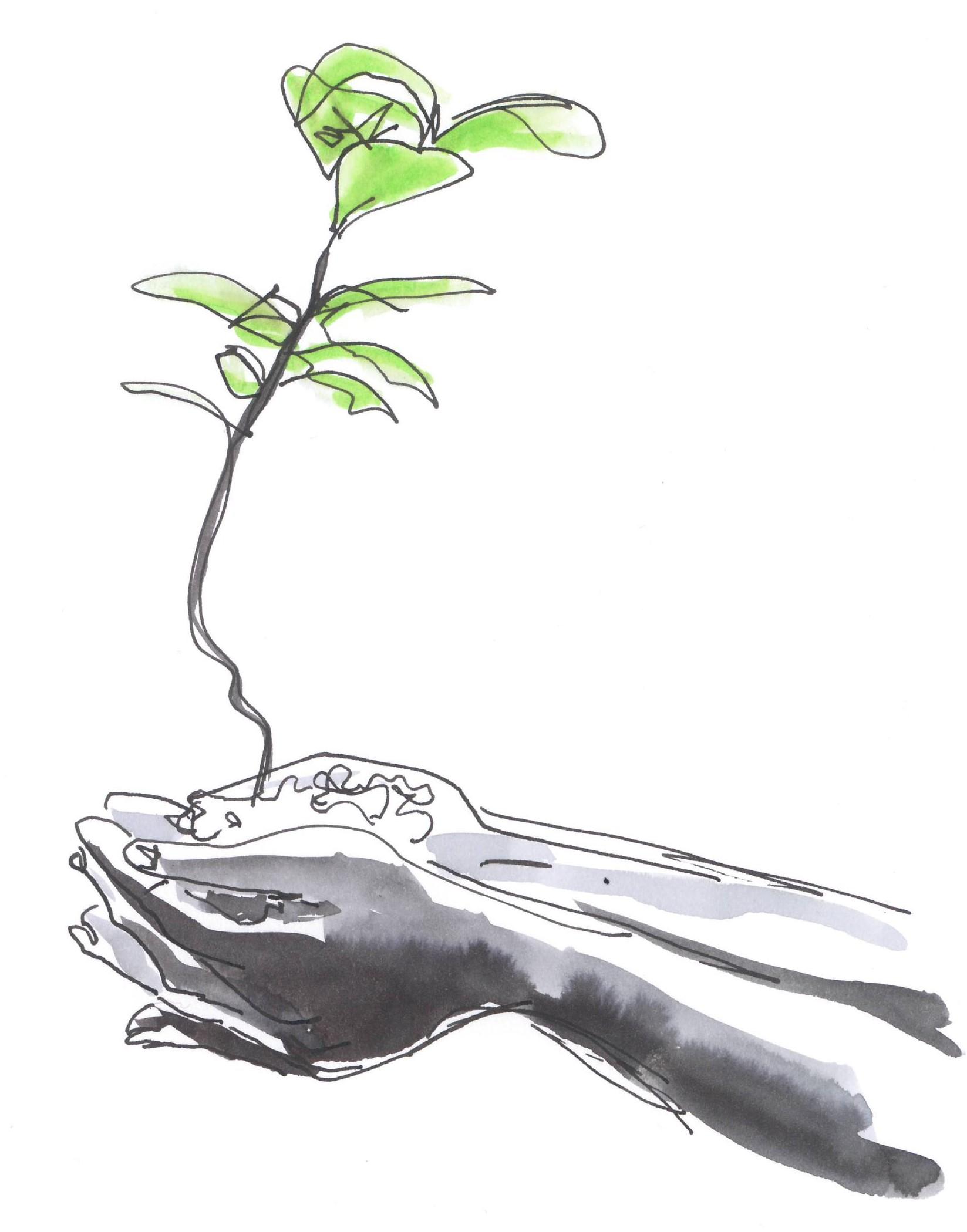 GDS Plante dans les mains.jpg